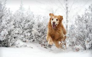 Crocx - Trucs et astuces pour profiter de l'hiver avec votre chien