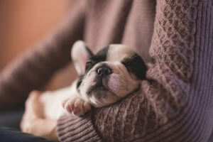 Accueillir un chiot à la maison: 4 essentiels