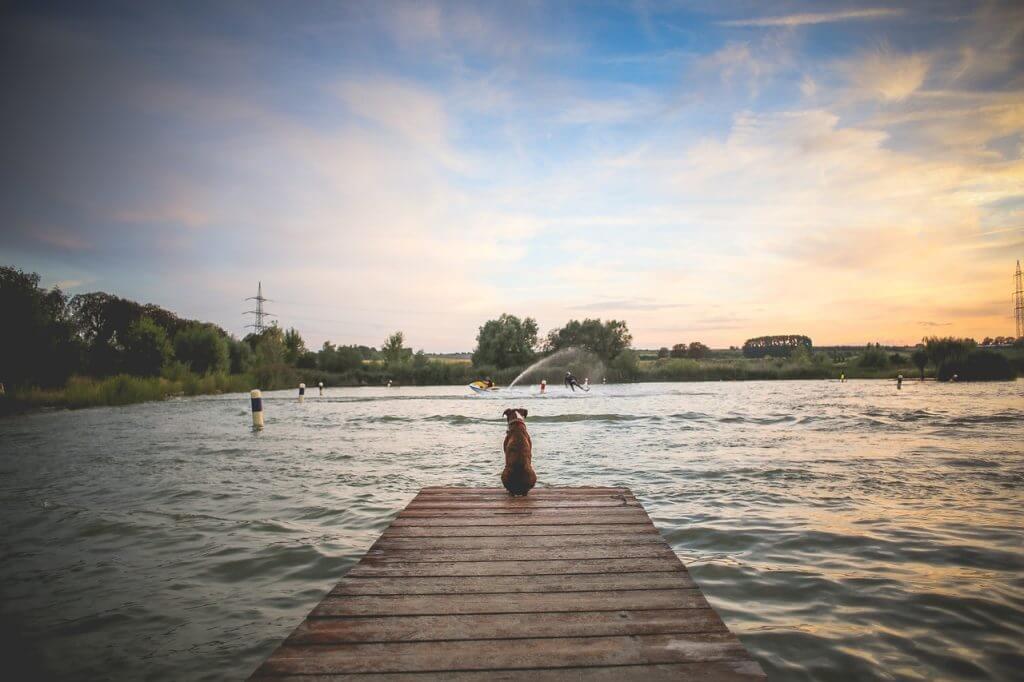 Votre chien et la baignade
