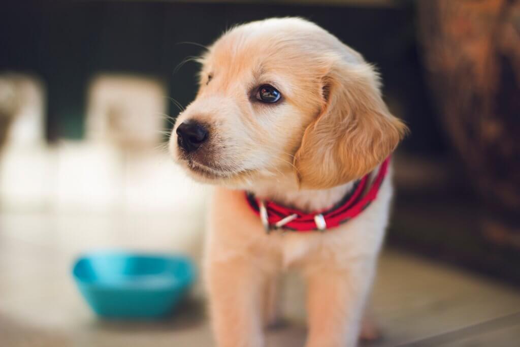 Les questions à se poser avant d'offrir un animal en cadeau
